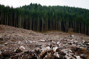 loggingphotosm