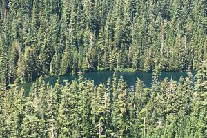 ourwork-forest