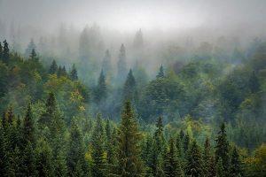 landscapeforest